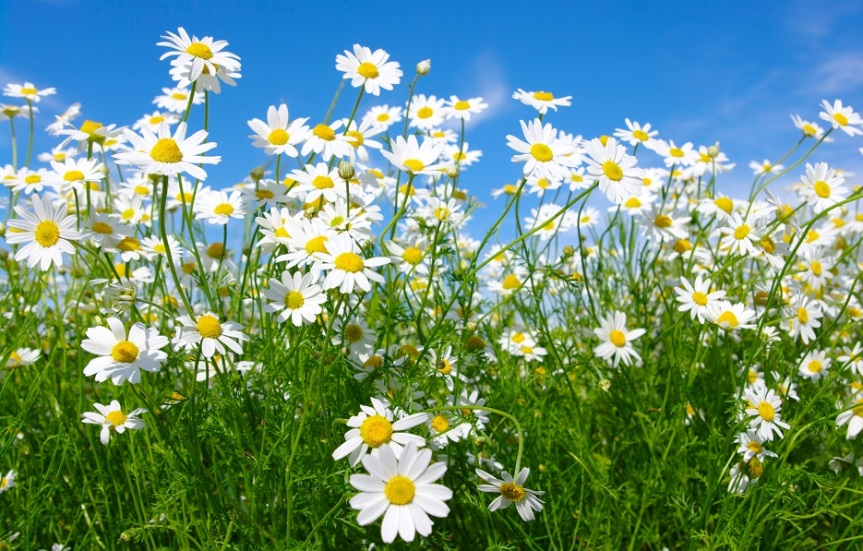 99 Word Prompt: WhiteFlowers