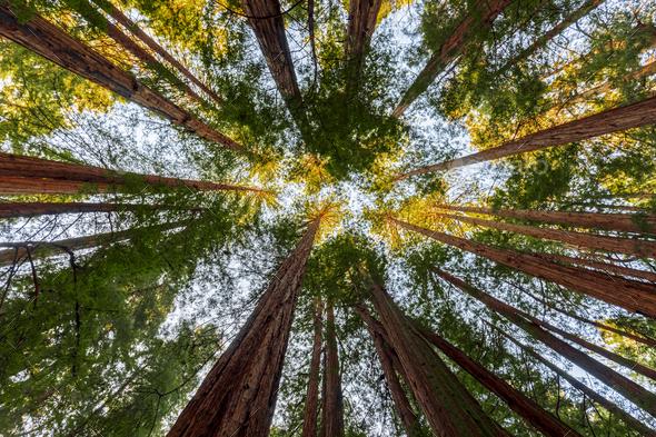 99 Word Prompt:Trees